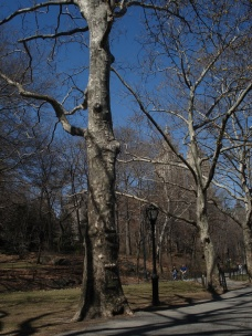 Central Park (NYC), Photo 1598