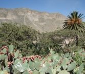 Colca Canyon, Photo 1517