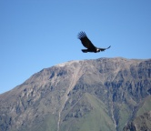 Colca Canyon, Photo 1519